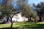 Chapelle entourée d'oliviers