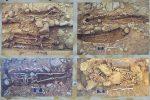 Ces tombes témoignaient de différents types(panneau d'information)