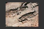 Quelques tombes découvertes à proximité du complexe (11e-12e siècles) (c Thierry Maziers, Inrap)