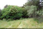 Le sentier passe entre un grand figuier et un olivier