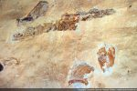 Fragments de fresque: beau visage et bandeau. Fresques attribuées à Nicolas Corso (confrérie)