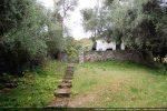 La chapelle et son campanile au milieu des oliviers