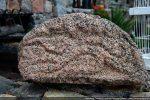Tympan sculpté: monstre à tête de serpent (première moitié du 12e siècle)
