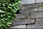 motif de lignes courbes en partie recouvert par le lierre (mur sud extérieur)