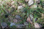 Les petites pierres de couleur grise, rose et verte devaient  offrir un joli jeu de polychromie