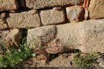 Détail du menhir Sagone 1: ébauche de la tête et du cou