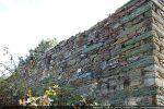 Mur nord envahi par un roncier